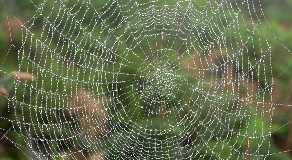 Cobweb-1