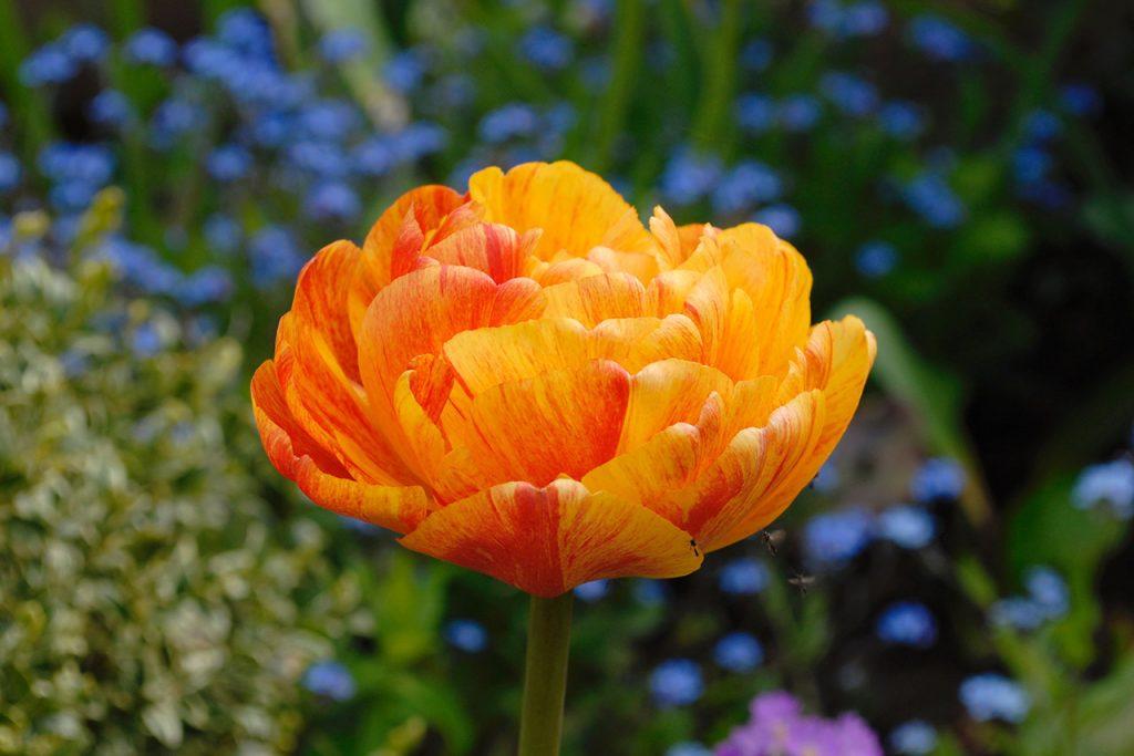 AT-garden-Spring'20-02
