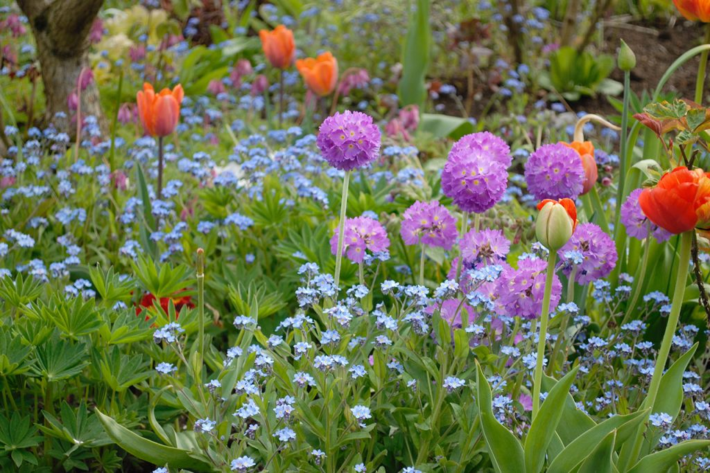 AT-garden-Spring'20-05